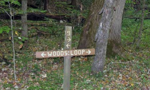 Woods Loop Trail