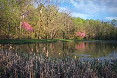 Spring Birding Gathering at Mary Gray Bird Sanctuary, May 4