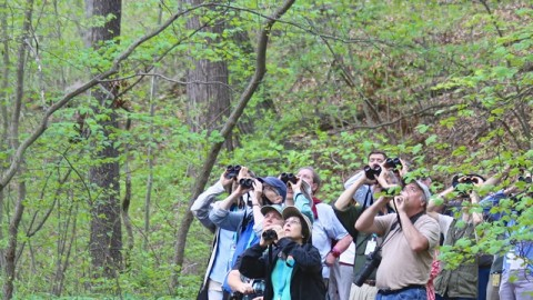 Four Weekends of Birding Events in May!