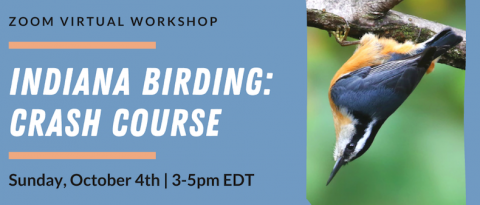 Indiana Birding Crash course